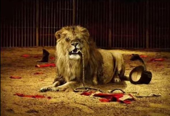 carta de un leon a otro